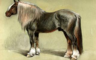 Все о сказочных русских лошадях породы битюг