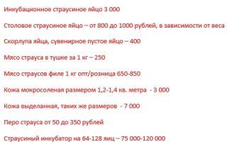 Сколько стоит страус, его мясо и яйца в россии