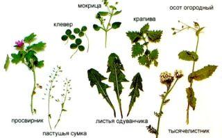 Какие травы для кормления можно давать кроликам, а какие нет