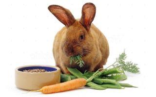 В каких витаминах нуждается кролик и где их взять