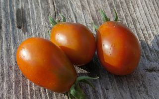 Характеристика и описание томатов «черный мавр»