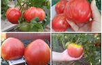 Описание и характеристика сорта томатов с высокой урожайностью – «буденовка»