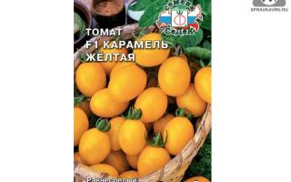Описание и характеристика томатов сорта «карамель»