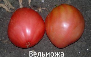 Описание и характеристики томатов «вельможа»
