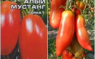 Описание и выращивание вкусного и запоминающегося томата «мустанг»