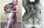 Все самое интересное про кроликов