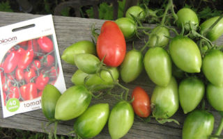 Описание и характеристика томатов «рома»