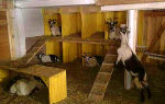 Постройка сарая (козлятника) для коз своими руками