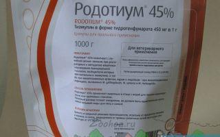 Применение антибиотика «родотиум» для лечения голубей