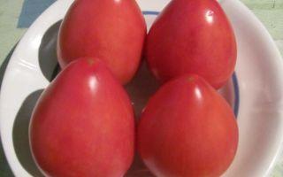 Описание и характеристики популярного в россии сорта томатов «фатима»