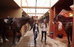 Иппология – наука о лошадях