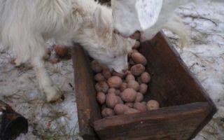 Как создать правильные условия для содержания коз в зимнее время