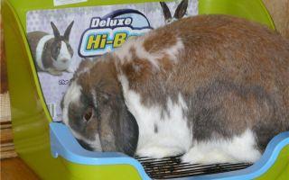 Организация туалета для кролика: приучение к лотку