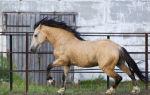 Вся информация о саврасой масти лошадей