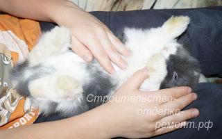 К чему может привести вздутие живота у кролика и как это лечить