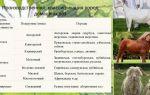 Главные мясные породы коз, их достоинства и виды