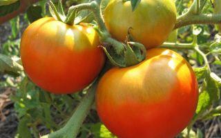 Характеристика и описание непревередливого и универсального томата «толстый джек»