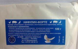 Применения нифулин-форте для голубей