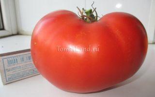 «линда» и «линда f1» – описание таких разных томатов