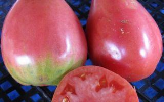 Описание и секреты выращивания томата «сенсей»