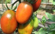 «де барао» – особенности, характеристика и выращивание сорта томатов