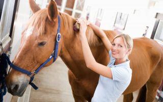Как ухаживать за гривой лошади