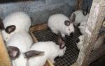 Бизнес на разведении кроликов – выгоден ли и как его спланировать