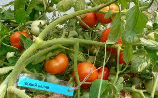 Описание и выращивание сорта томатов «белый налив»