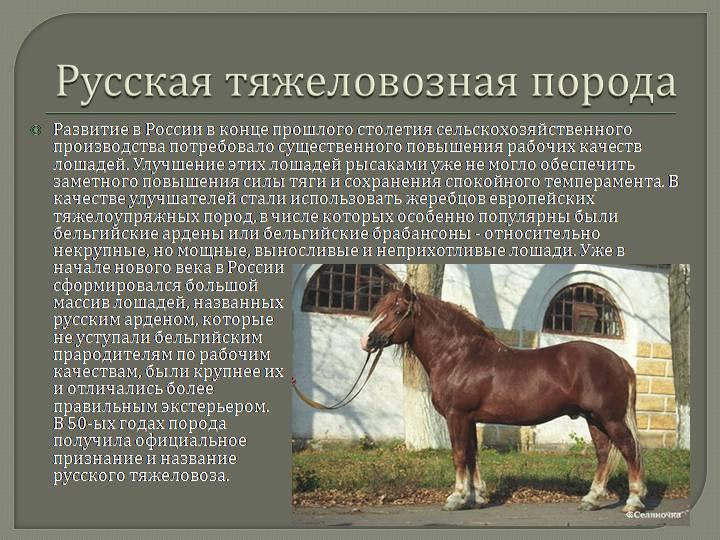что картинки с описанием пород лошадей увидела, что